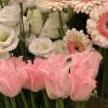 tavaszi virágok - dekoráció
